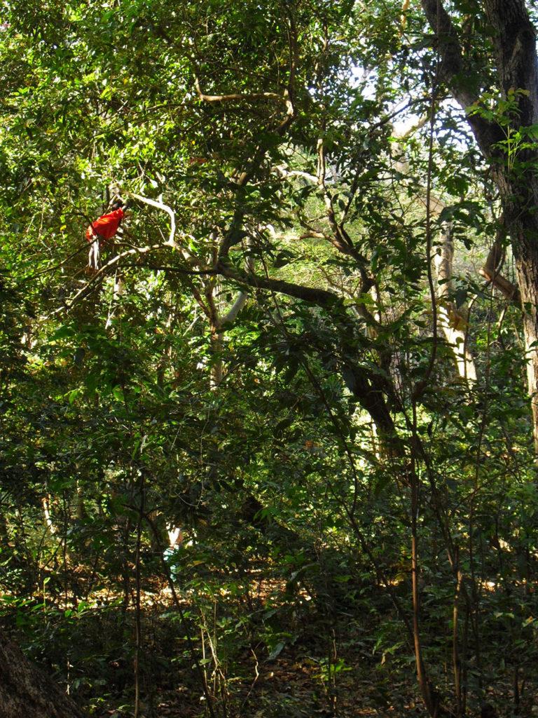 foresta-bimbo-sugli-alberi-arba-minch-omo-ethiopia-etiopia