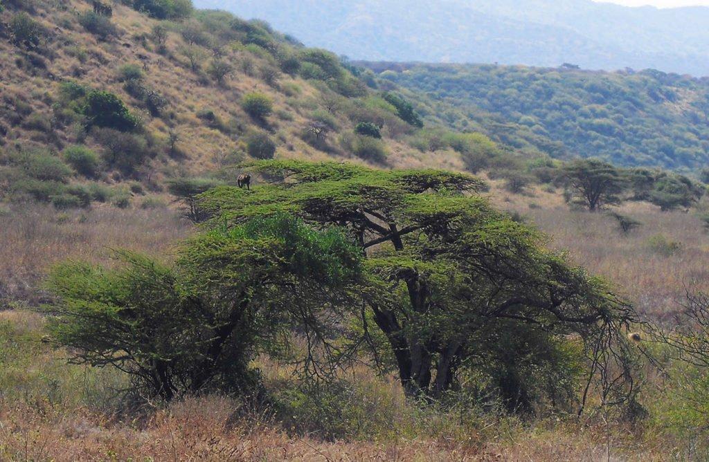 savana-arba-minch-omo-ethiopia-etiopia