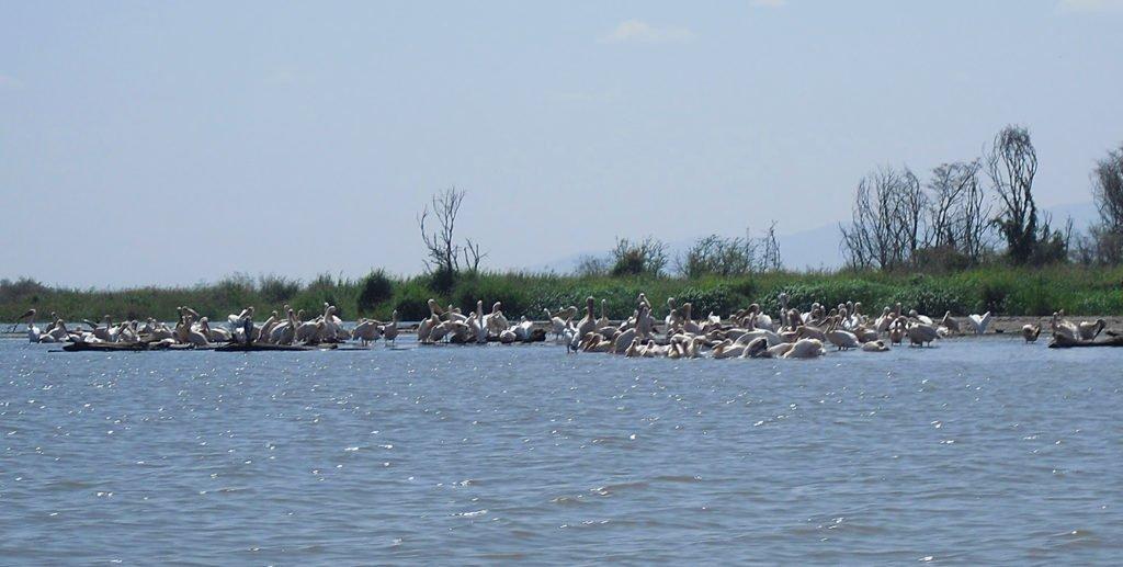 uccelli-lago-chamo-arba-minch-omo-ethiopia-etiopia